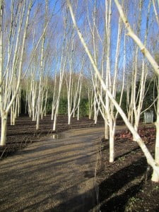 Mar 2014 Photo of the Month - Wood by Derick Hill